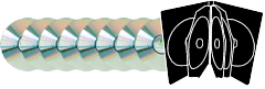 Eight CDs in double DVD size cases duplication